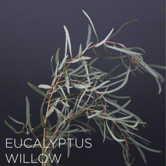 WillowEucalyptus